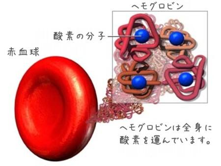 hemoglobin1